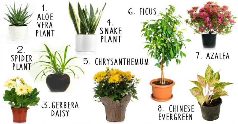 House Plants Purify Air