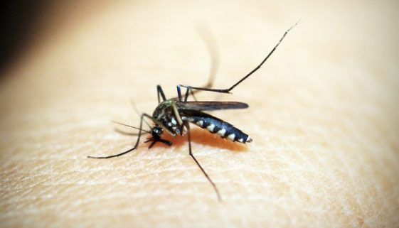 how to stop a mosquito bite from itching 4
