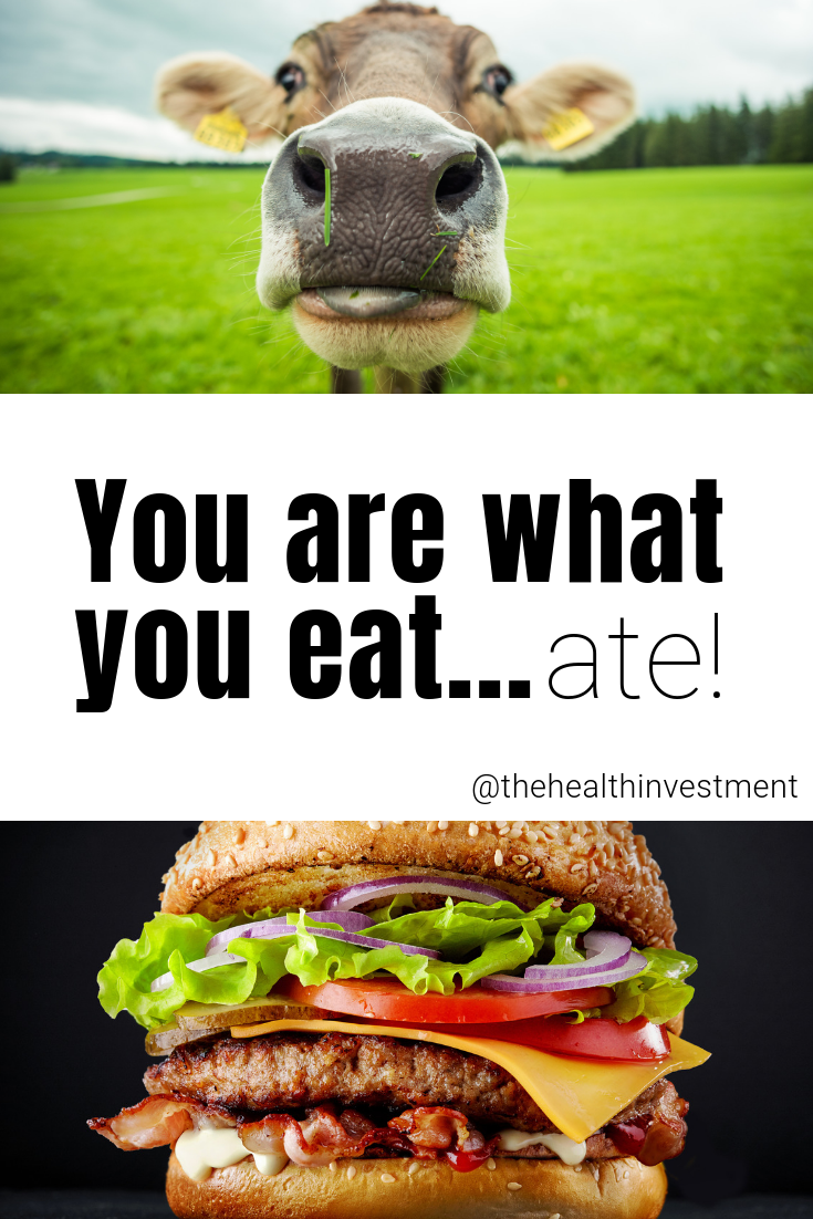 Picture of cow above title and burger below title - You Are What You Eat...Ate!