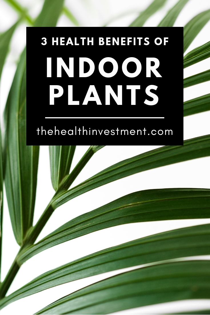 Picture of plant fronds behind title - 3 Health Benefits of Indoor Plants